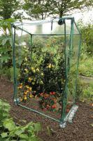 Mini Tomatenkas 150 x 100 x 100 cm