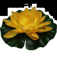 Waterlelie 14 cm geel